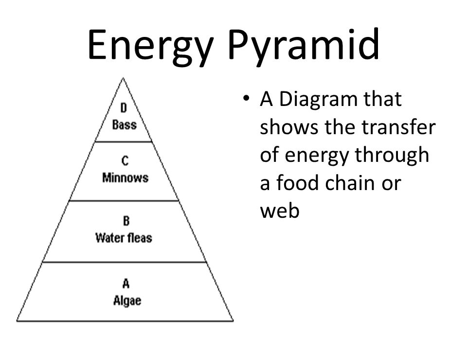 Energy Pyramid A Diagram that shows the transfer of energy through a food chain or web