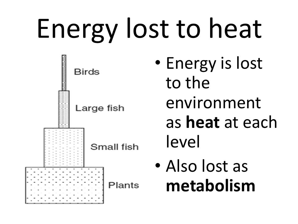 Energy lost to heat Energy is lost to the environment as heat at each level Also lost as metabolism