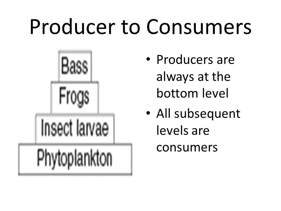 Producer to Consumers Producers are always at the bottom level