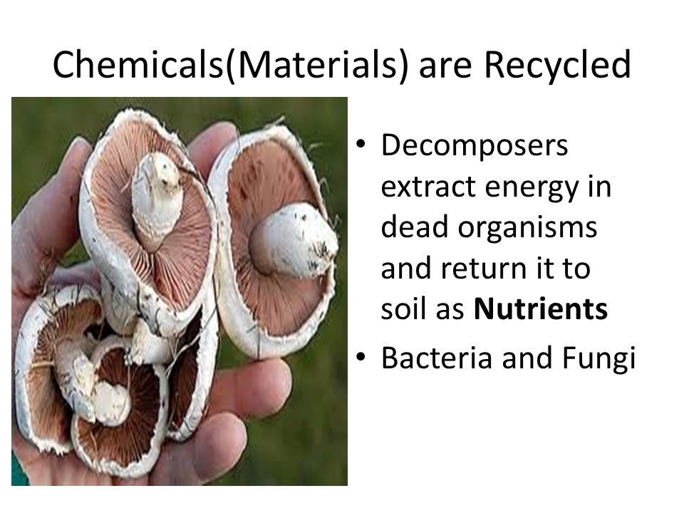 Chemicals(Materials) are Recycled