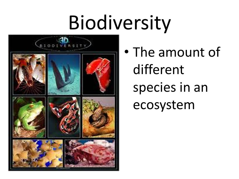 Biodiversity The amount of different species in an ecosystem
