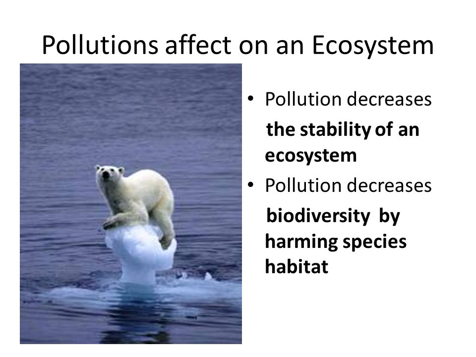 Pollutions affect on an Ecosystem