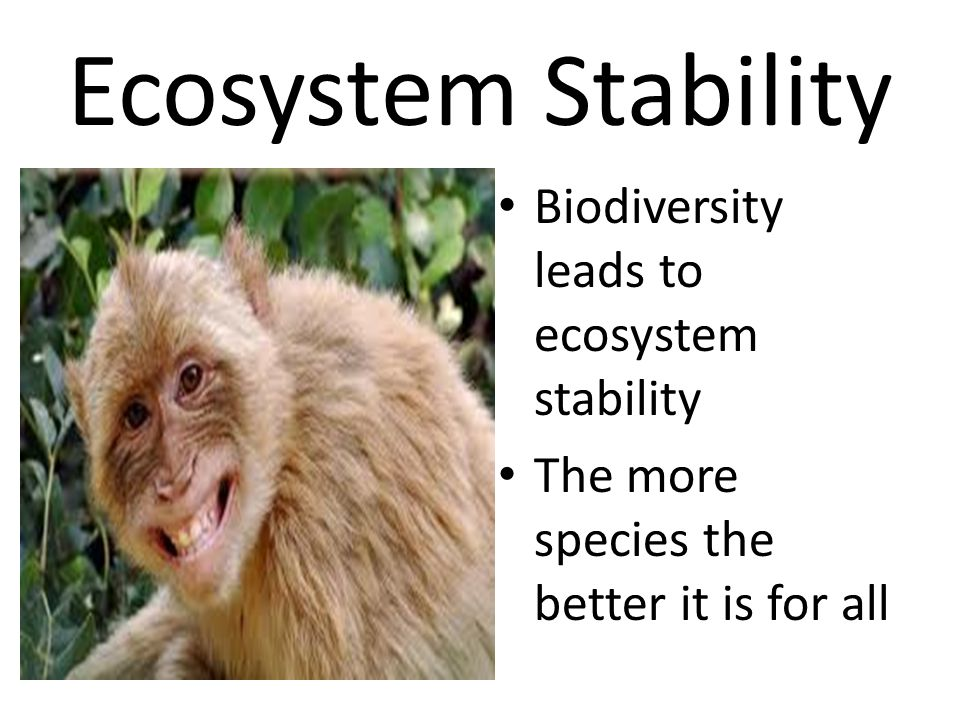 Ecosystem Stability Biodiversity leads to ecosystem stability