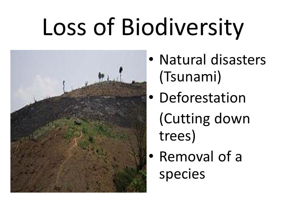 Loss of Biodiversity Natural disasters (Tsunami) Deforestation