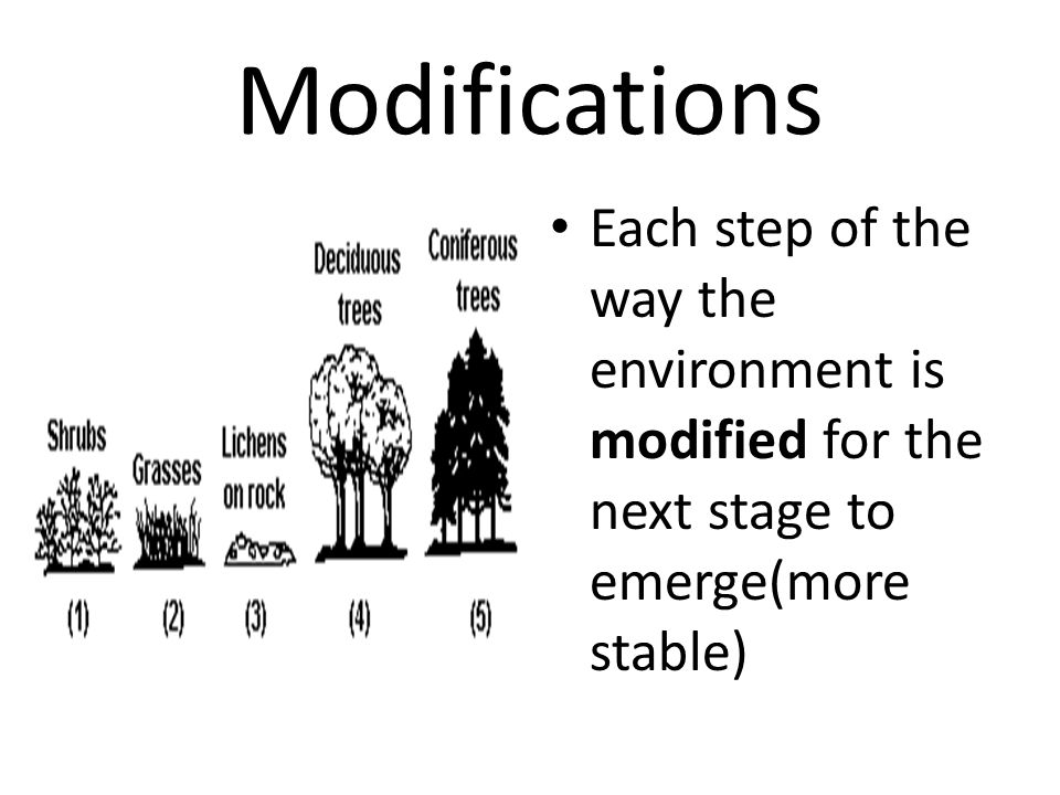 Modifications Each step of the way the environment is modified for the next stage to emerge(more stable)