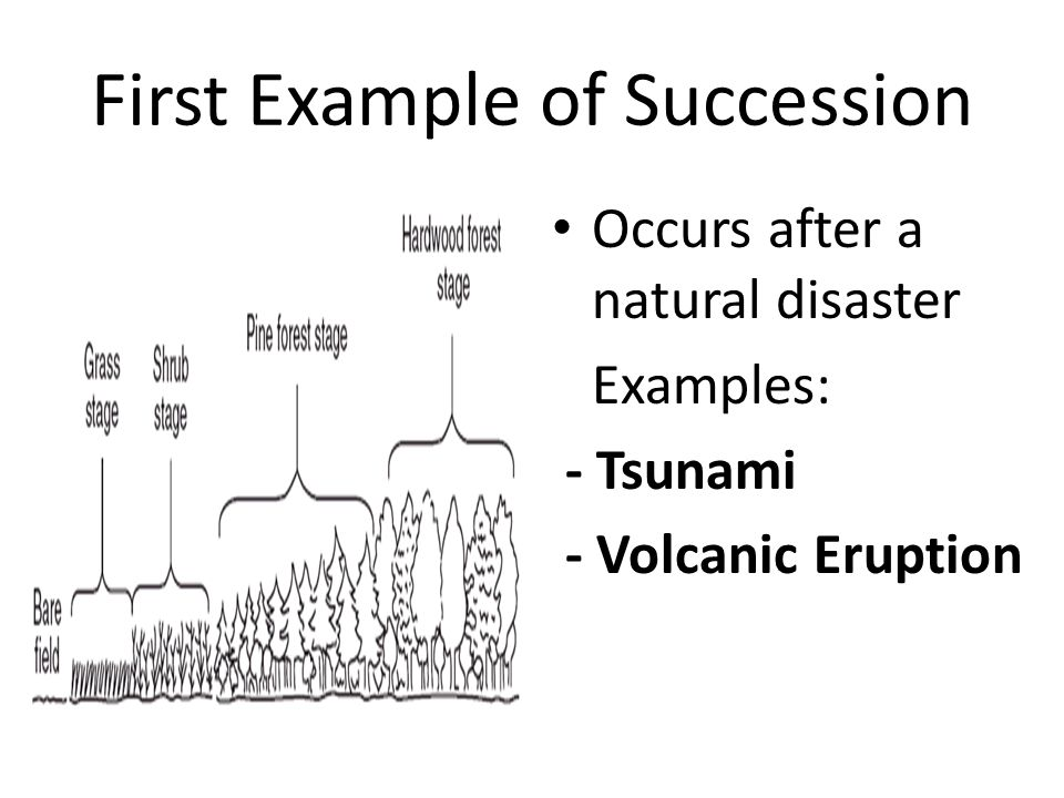 First Example of Succession