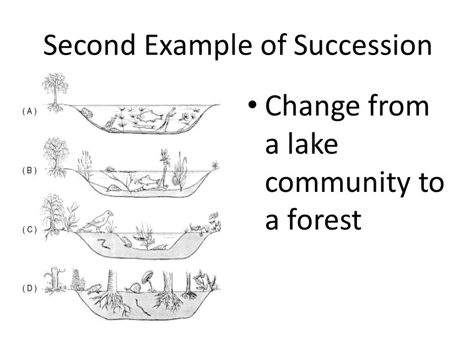 Second Example of Succession