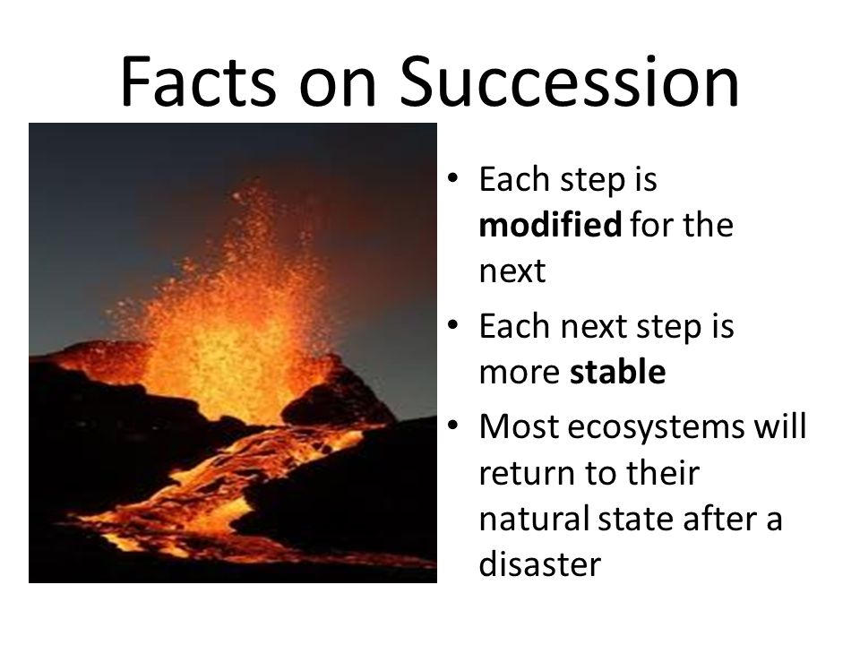 Facts on Succession Each step is modified for the next