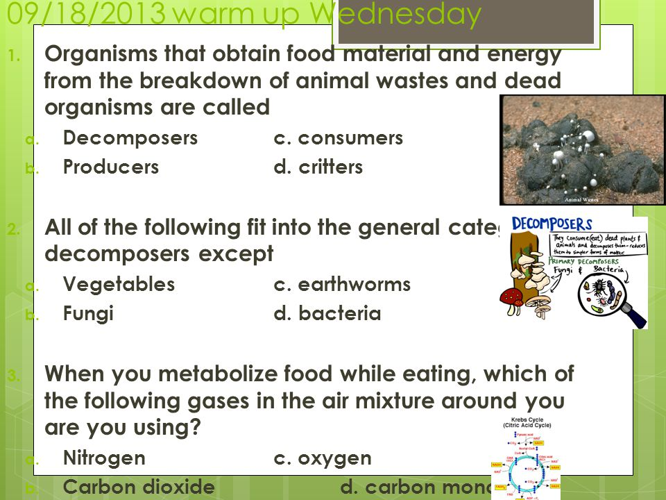 09/18/2013 warm up Wednesday Organisms that obtain food material and energy from the breakdown of animal wastes and dead organisms are called.
