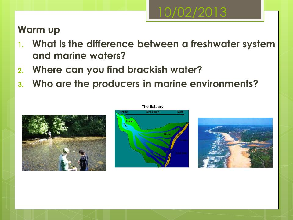 10/02/2013 Warm up. What is the difference between a freshwater system and marine waters Where can you find brackish water