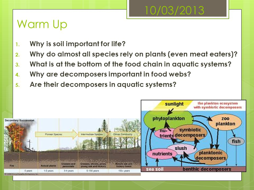 10/03/2013 Warm Up Why is soil important for life