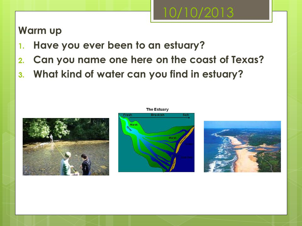 10/10/2013 Warm up Have you ever been to an estuary