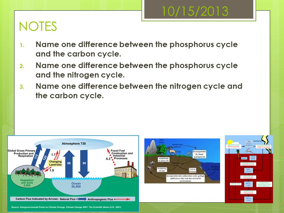 10/15/2013 NOTES Name one difference between the phosphorus cycle and the carbon cycle.