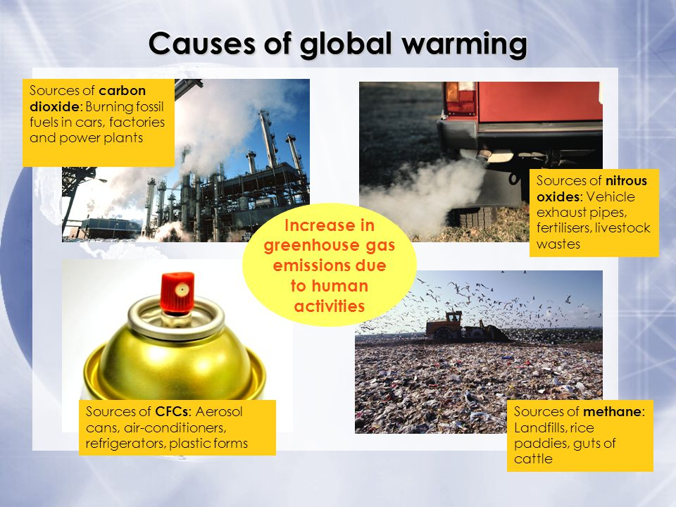 global warming environmental effects essay