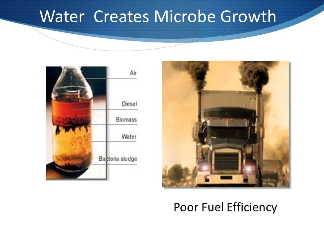Water Creates Microbe Growth