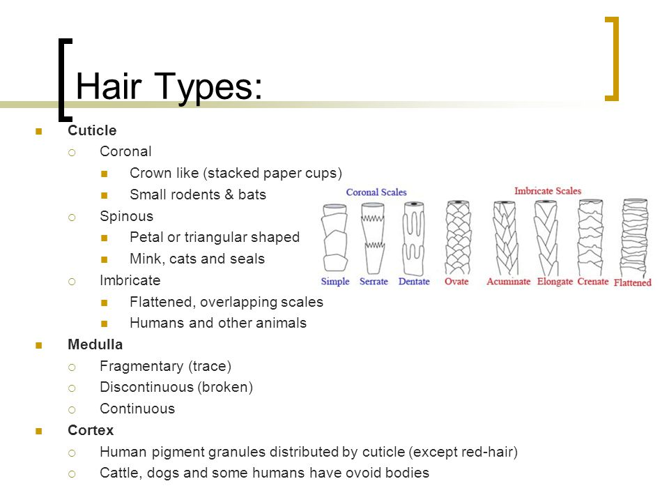 Hair Types: Cuticle Coronal Crown like (stacked paper cups)