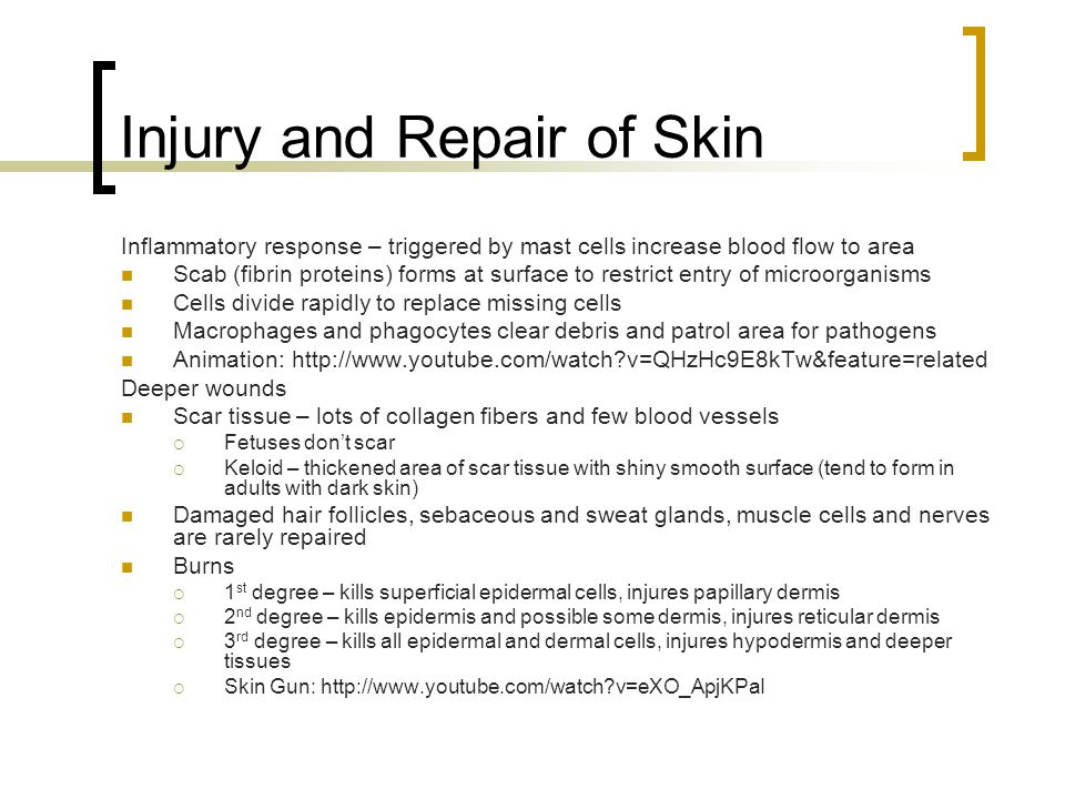 Injury and Repair of Skin