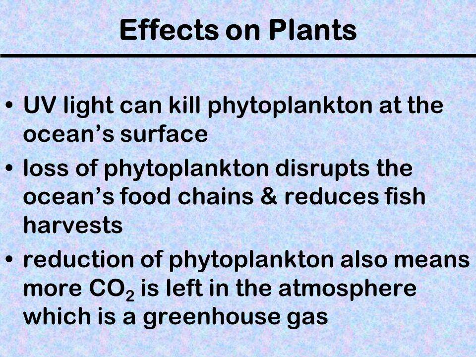 Effects on Plants UV light can kill phytoplankton at the ocean's surface.