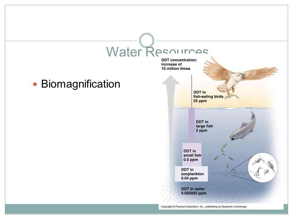 Water Resources Biomagnification