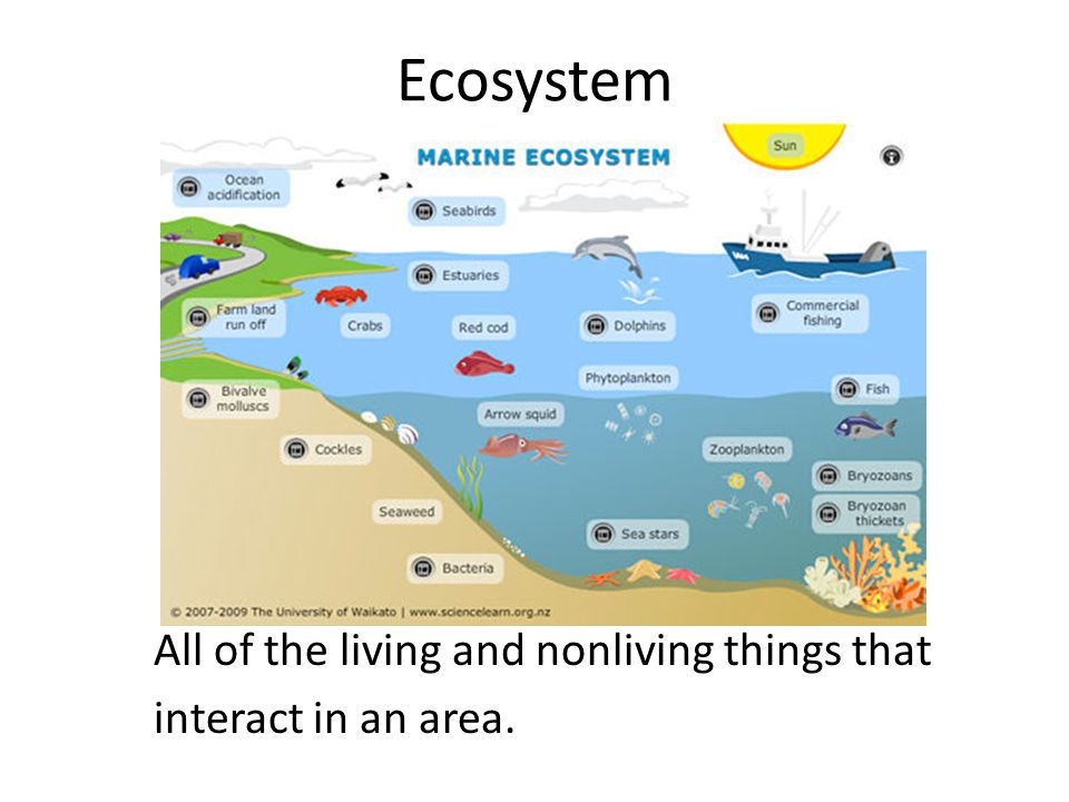 Ecosystem All of the living and nonliving things that interact in an area.