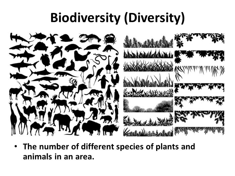 Where An Organism Finds Food And Shelter