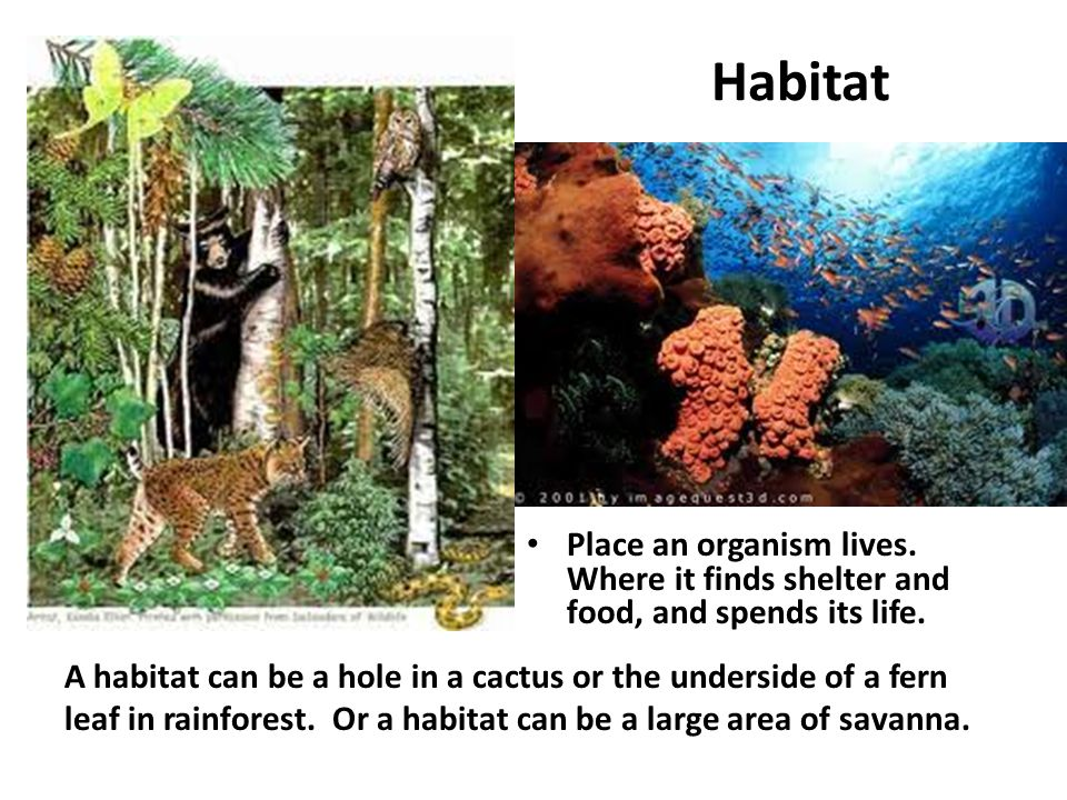 Habitat Place an organism lives. Where it finds shelter and food, and spends its life.