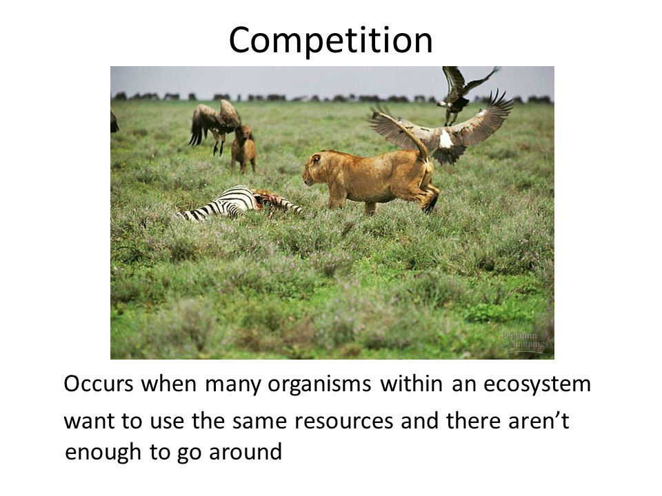 Competition Occurs when many organisms within an ecosystem want to use the same resources and there aren't enough to go around
