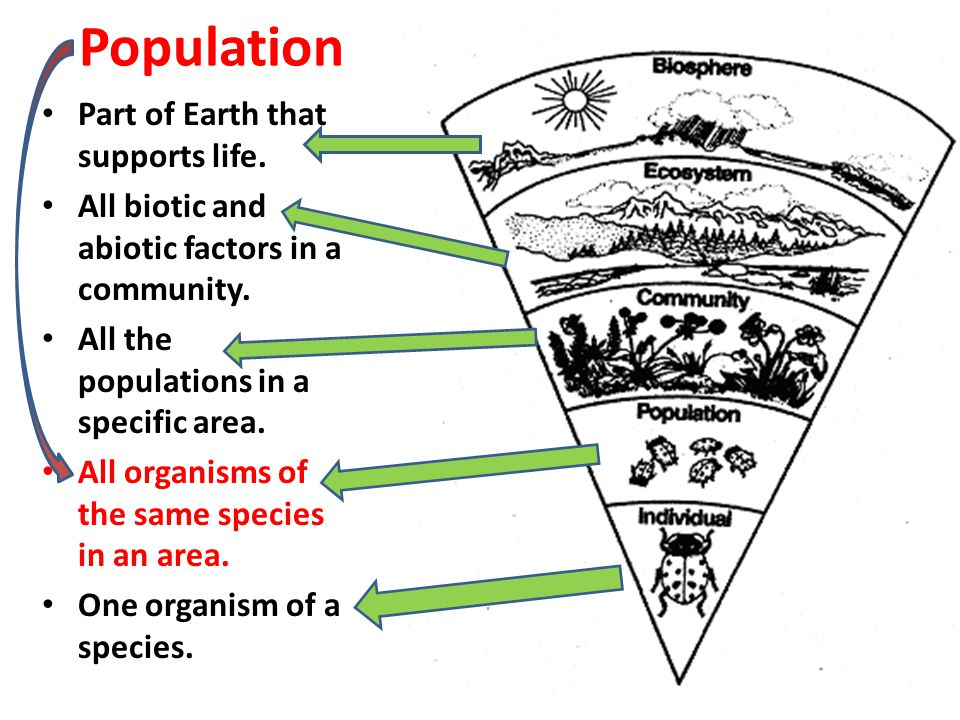 Population Part of Earth that supports life.
