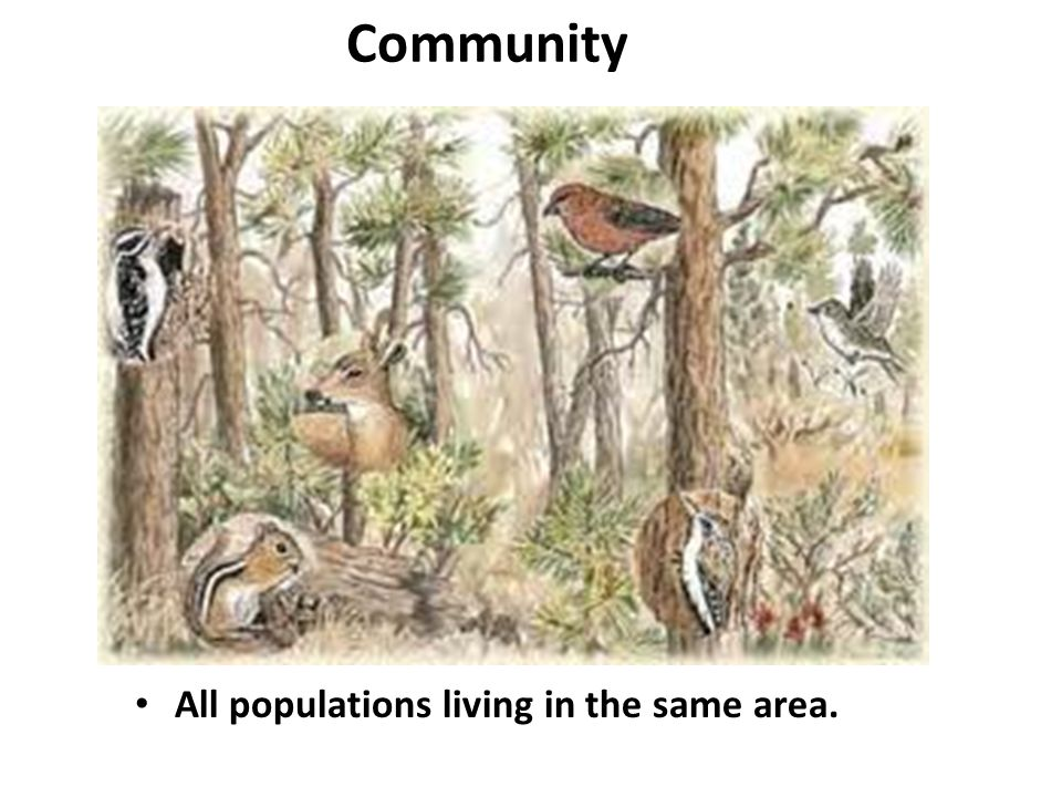 Community All populations living in the same area.