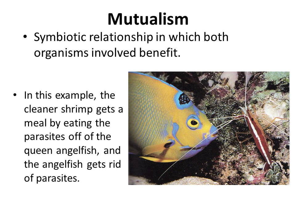 Mutualism Symbiotic relationship in which both organisms involved benefit.