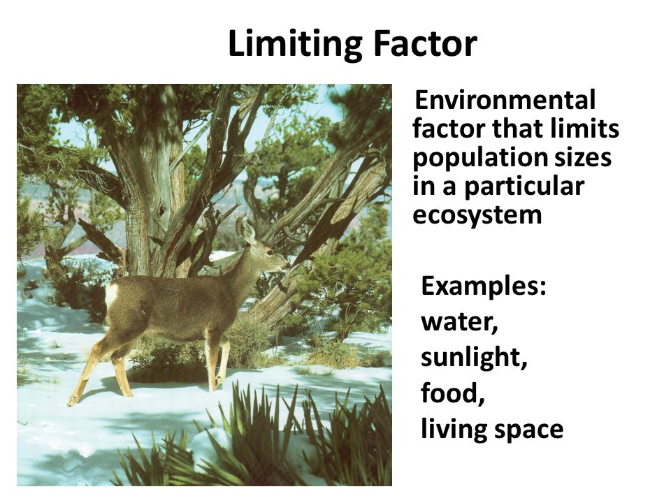 Limiting Factor Environmental factor that limits population sizes in a particular ecosystem. Examples: