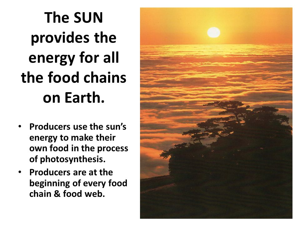 The SUN provides the energy for all the food chains on Earth.