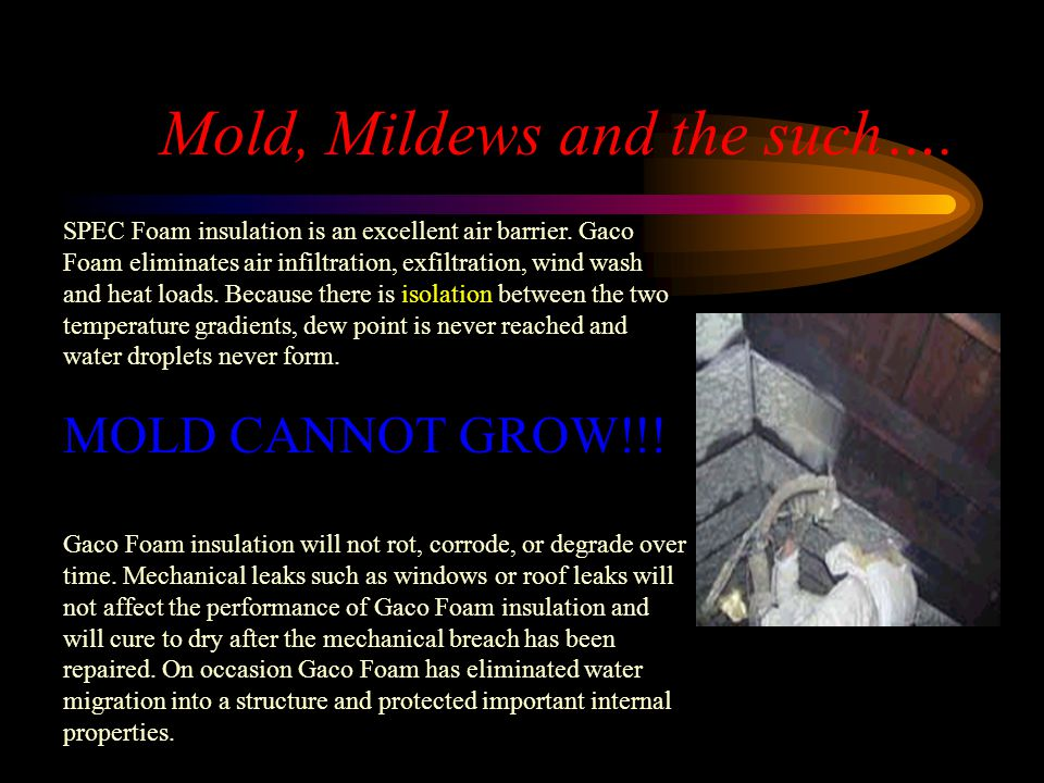 Mold, Mildews and the such….
