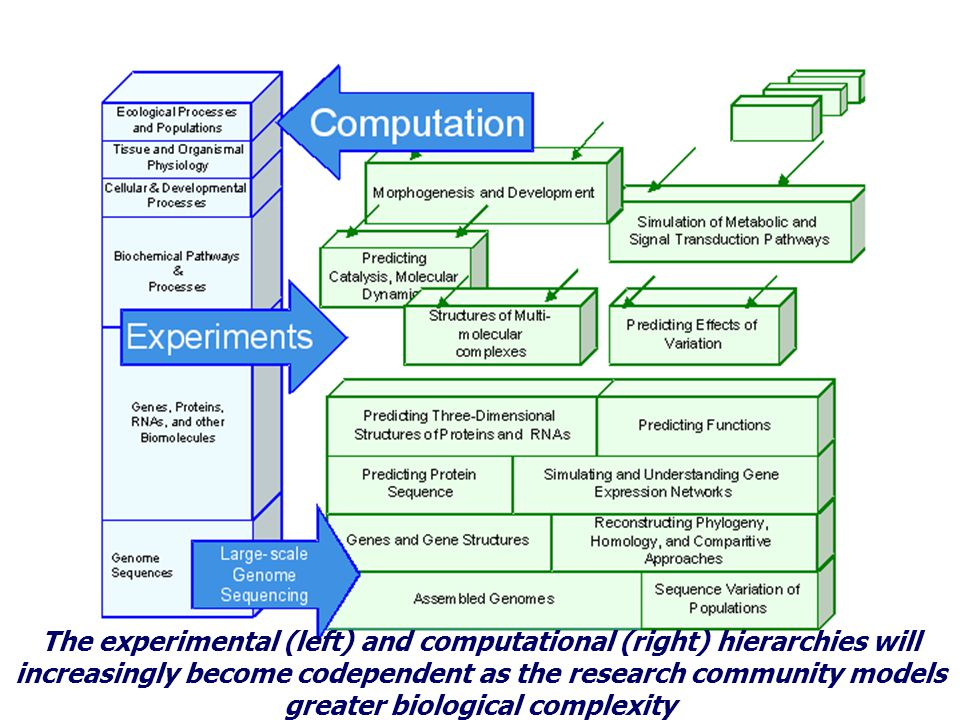 The experimental (left) and computational (right) hierarchies will increasingly become codependent as the research community models greater biological complexity