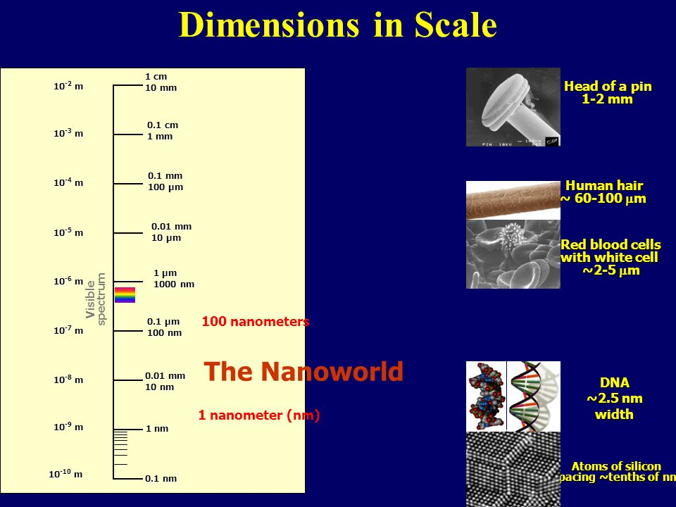 Dimensions in Scale The Nanoworld Head of a pin 1-2 mm Human hair
