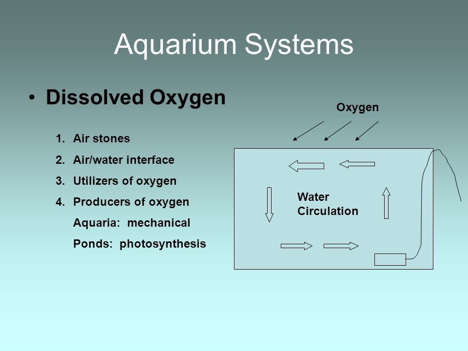 Aquarium Systems Dissolved Oxygen Oxygen Air stones