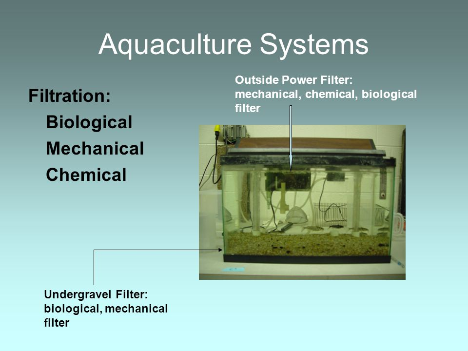 Aquaculture Systems Filtration: Biological Mechanical Chemical