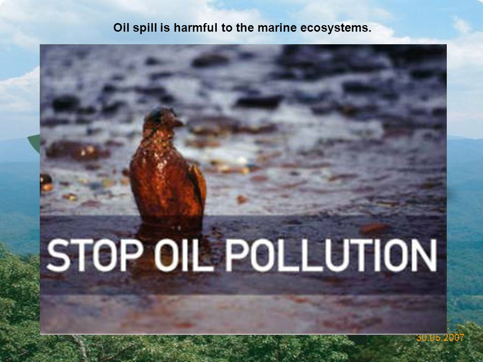 Oil spill is harmful to the marine ecosystems.