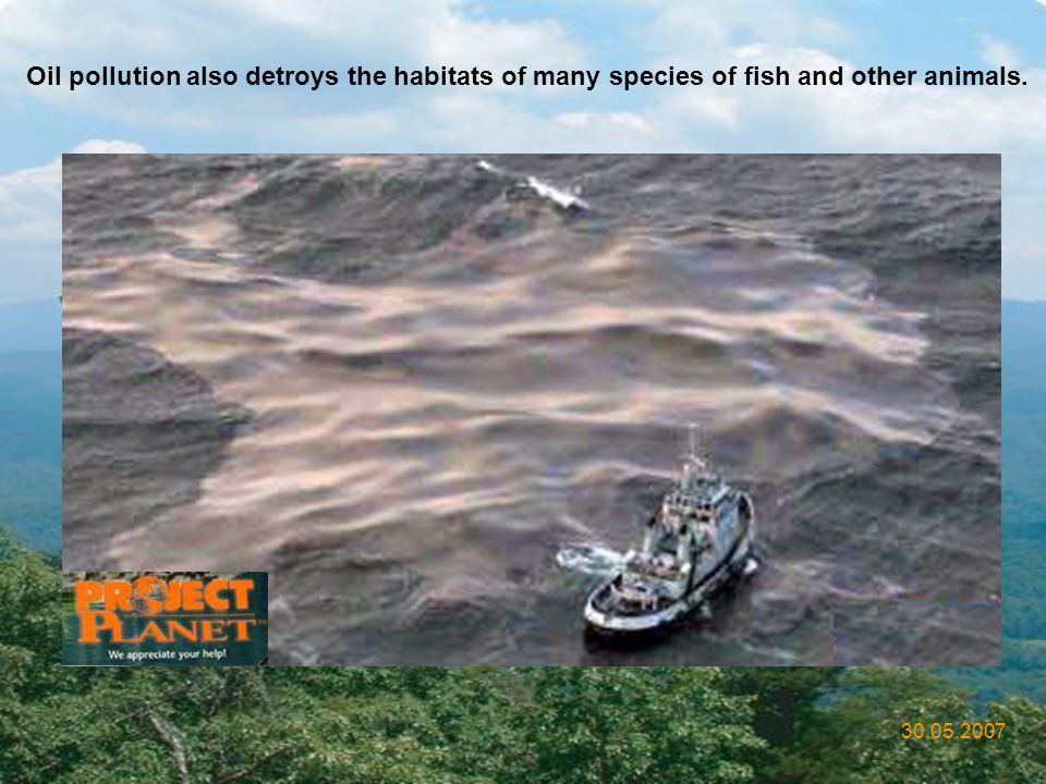Oil pollution also detroys the habitats of many species of fish and other animals.