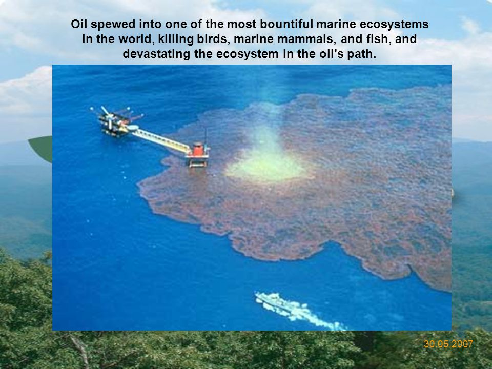 Oil spewed into one of the most bountiful marine ecosystems in the world, killing birds, marine mammals, and fish, and devastating the ecosystem in the oil s path.