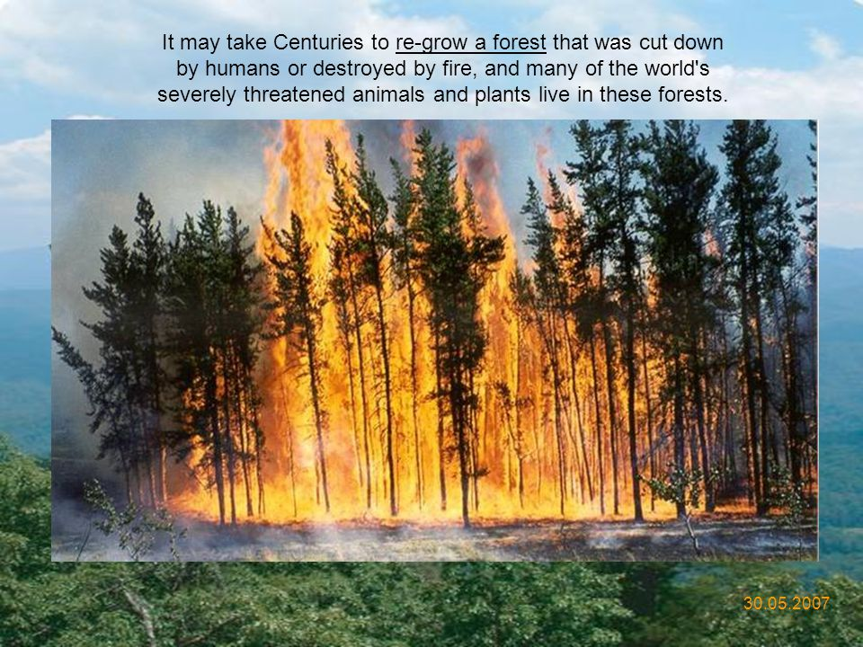 It may take Centuries to re-grow a forest that was cut down by humans or destroyed by fire, and many of the world s severely threatened animals and plants live in these forests.