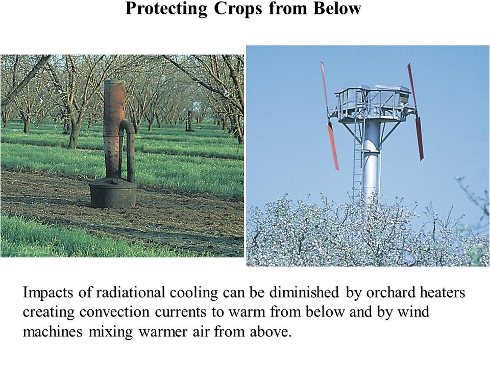 Protecting Crops from Below