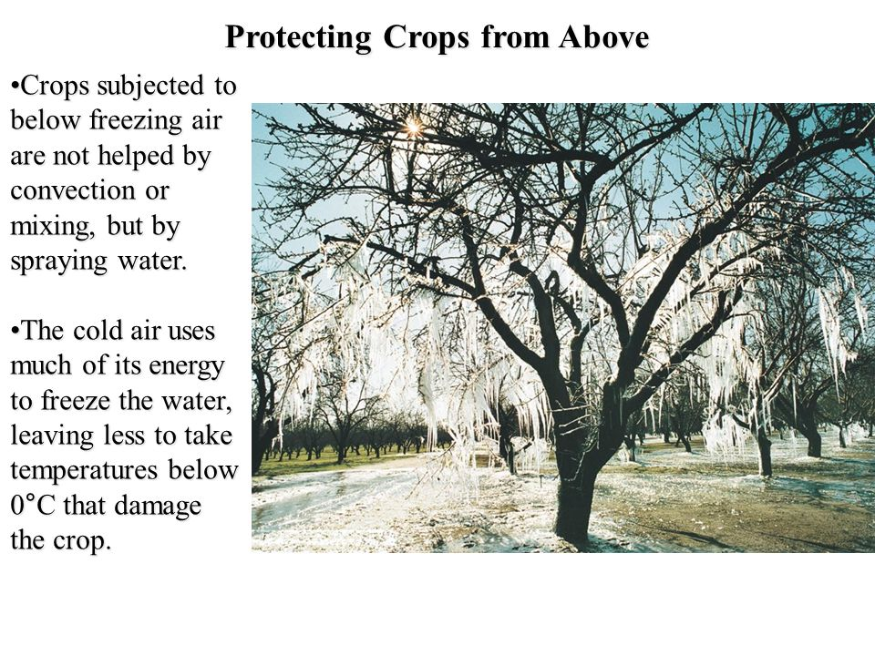 Protecting Crops from Above