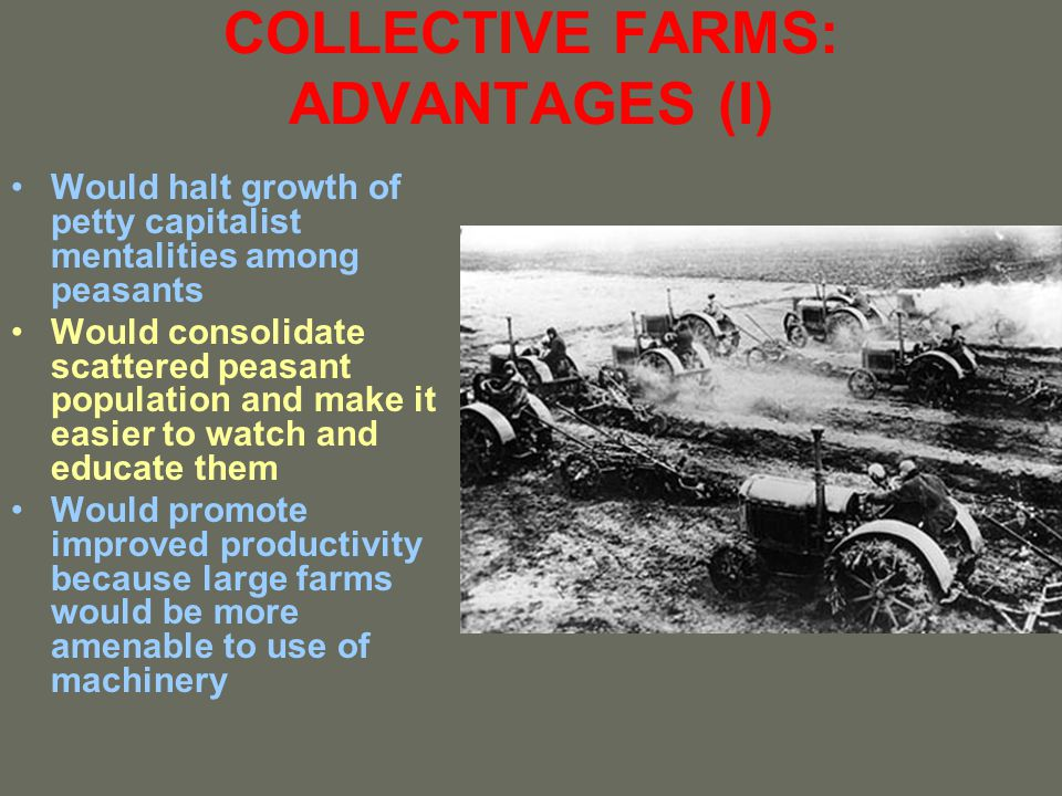 COLLECTIVE FARMS: ADVANTAGES (I)