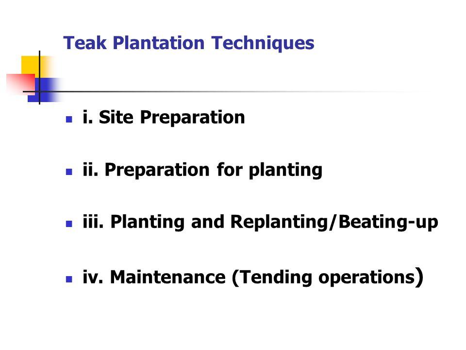 Teak Plantation Techniques