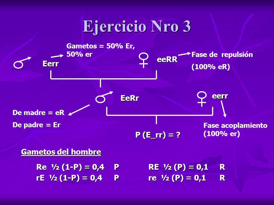 Ejercicio Nro 3 eeRR Eerr eerr EeRr P (E_rr) = Gametos del hombre