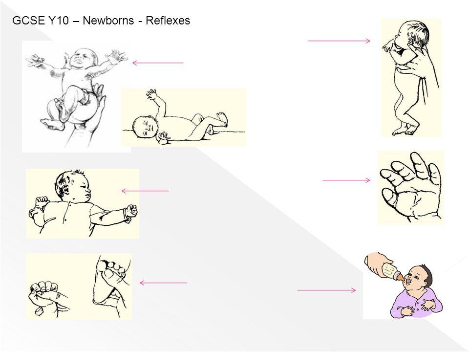 GCSE Y10 – Newborns - Reflexes
