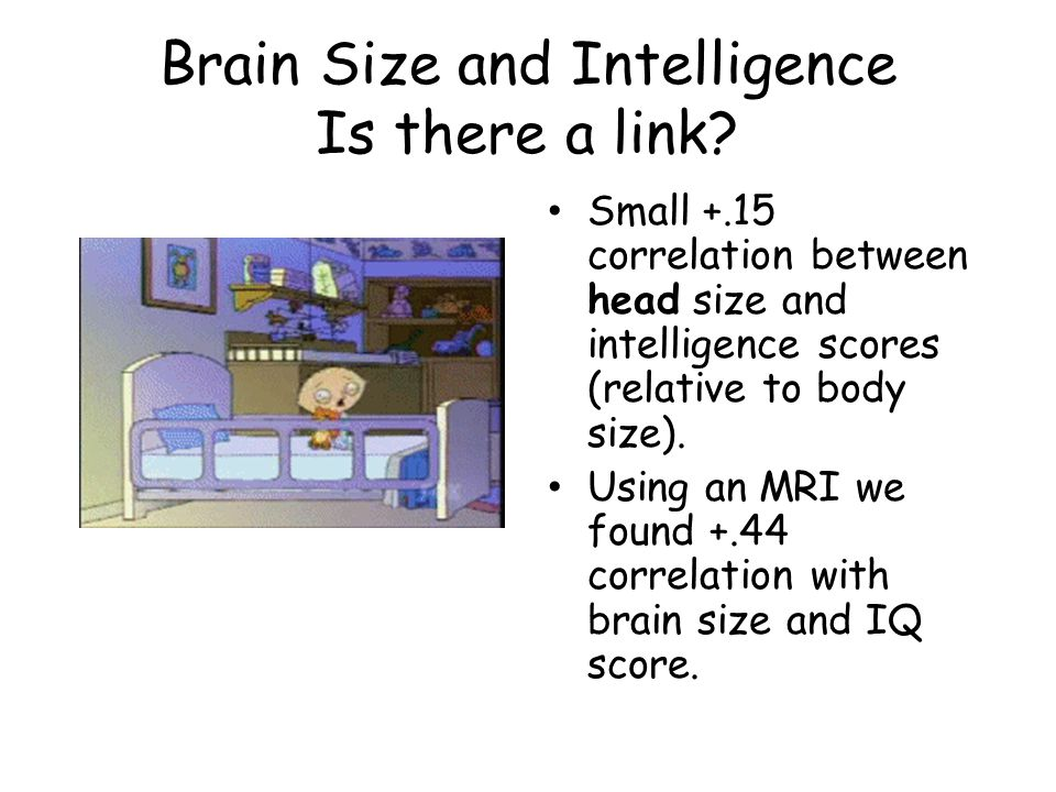 Brain Size and Intelligence Is there a link