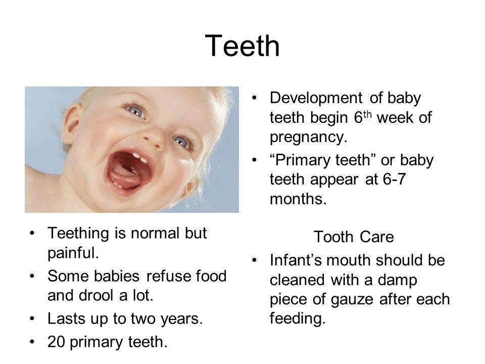 Teeth Development of baby teeth begin 6th week of pregnancy.