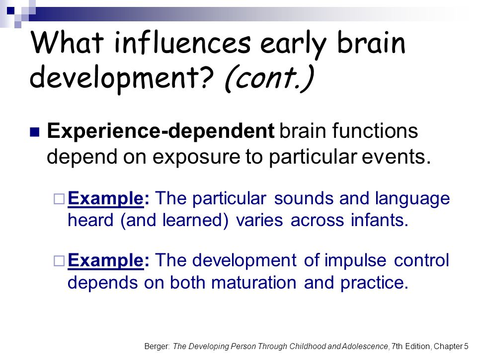 What influences early brain development (cont.)